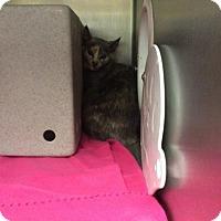 Adopt A Pet :: Gigglebyte - Janesville, WI