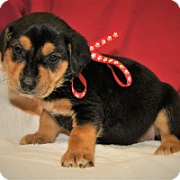 Adopt A Pet :: Danica ~ ADOPTED! - Allentown, PA