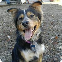 Adopt A Pet :: Curbo  (ETAA) - Washington, DC