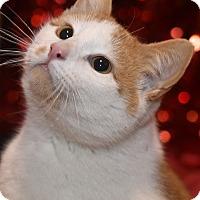 Adopt A Pet :: Sparky - St. Louis, MO