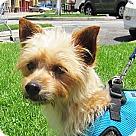 Adopt A Pet :: Hugo
