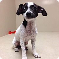 Adopt A Pet :: Ellie - Scottsdale, AZ