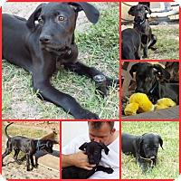 Adopt A Pet :: BLUE - Davenport, FL