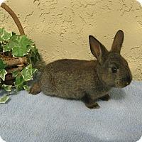 Adopt A Pet :: Briquette - Bonita, CA