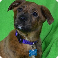Adopt A Pet :: Lila - Minneapolis, MN