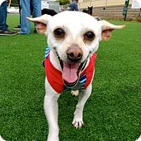 Adopt A Pet :: Piccachu - San Diego, CA