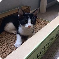 Adopt A Pet :: Sparky - Mission Viejo, CA