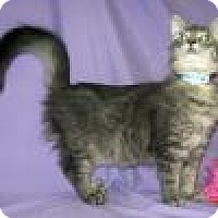 Adopt A Pet :: Danny - Powell, OH