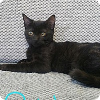 Adopt A Pet :: Robbie - Walnut Creek, CA