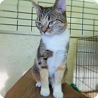 Adopt A Pet :: Trina - Walton County, GA