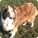 Adopt A Pet :: Missy (Adoption Pending)