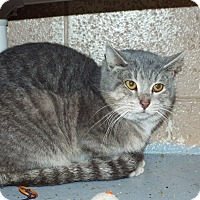 Adopt A Pet :: Milo - Shelby, MI