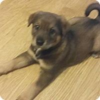 Adopt A Pet :: Clay - Kyle, TX