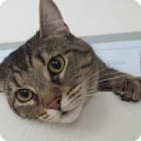 Adopt A Pet :: Heidi - McHenry, IL