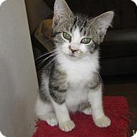 Adopt A Pet :: McCoy - Monticello, IA