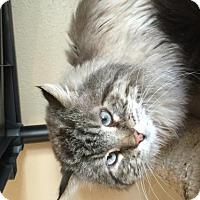 Adopt A Pet :: Charlie (FIV +) - Denver, CO