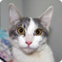 Adopt A Pet :: Hazel - Wildomar, CA