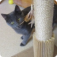 Domestic Shorthair Cat for adoption in Port Jervis, New York - Pond