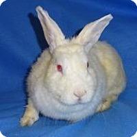 Adopt A Pet :: Betty White - Woburn, MA