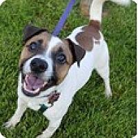 Adopt A Pet :: Dude - Bloomington, IL