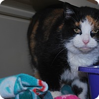 Adopt A Pet :: Hilda - New Castle, PA