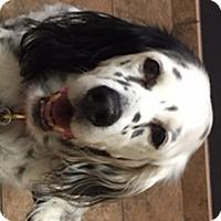 Adopt A Pet :: LEESEE - Pine Grove, PA