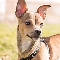 Adopt A Pet :: Noelle - San Diego, CA