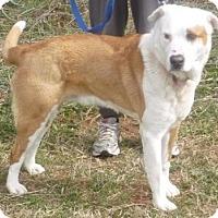 Adopt A Pet :: Sander, D13 - Mineral, VA