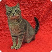 Adopt A Pet :: Mitch - Redwood Falls, MN