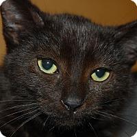 Adopt A Pet :: Nolan - Whittier, CA