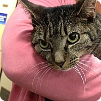 Adopt A Pet :: Felise - Pittstown, NJ