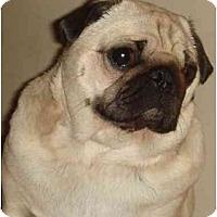 Adopt A Pet :: Muscles - Avondale, PA