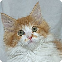 Adopt A Pet :: Bob M - Sacramento, CA