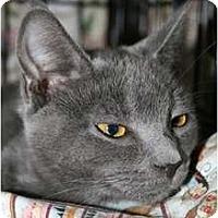 Adopt A Pet :: Natasha - Frederick, MD