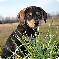 Adopt A Pet :: *Winston - PENDING - Westport, CT