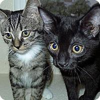 Adopt A Pet :: Robin - Irvine, CA