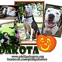 Adopt A Pet :: Dakota - Colleyville, TX