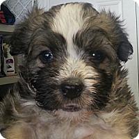 Adopt A Pet :: Mildred#7F - Orlando, FL
