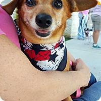 Adopt A Pet :: Sam - Baton Rouge, LA