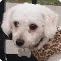 Adopt A Pet :: Robbie - La Costa, CA