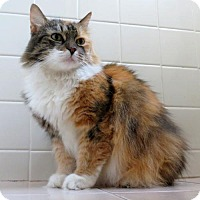 Adopt A Pet :: Mitzi - Philadelphia, PA
