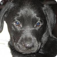 Adopt A Pet :: Fabio - Rocky Mount, NC