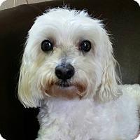 Adopt A Pet :: Frisco - Urbana, OH