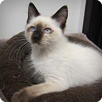 Adopt A Pet :: Willie (stunning!) - Roseville, MN
