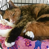 Adopt A Pet :: Clementine - Webster, MA