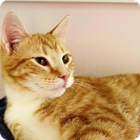 Adopt A Pet :: Morey - Waxhaw, NC