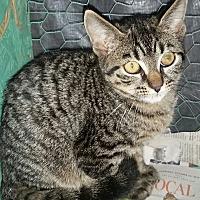 Adopt A Pet :: Sunny *5 mo - Ocala, FL
