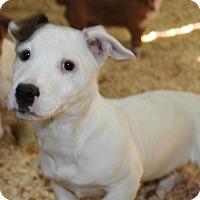 Adopt A Pet :: Honey Crisp - Harmony, Glocester, RI
