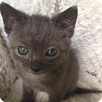 Adopt A Pet :: Tanya - Columbia, SC
