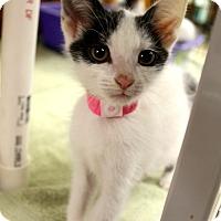 Adopt A Pet :: Ruthie - Medina, OH